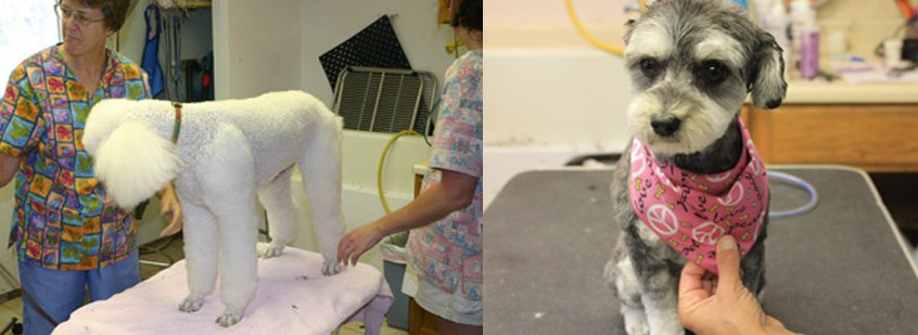 Grooming Salon Rates by Kozy Kennels in Mansfield, MA